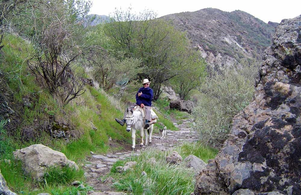 donkey-on-the-camino-real-near-la-culata