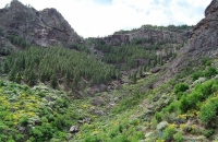 green-hills-near-roque-nublo