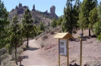looking-up-to-roque-nublo-from-la-goleta