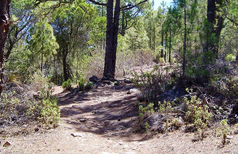 footpaths-in-the-tamadaba-forest